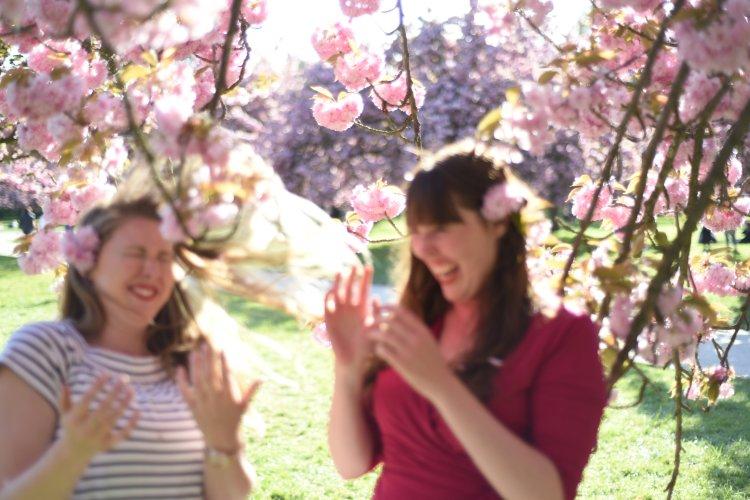 CherryBlossoms2017-240