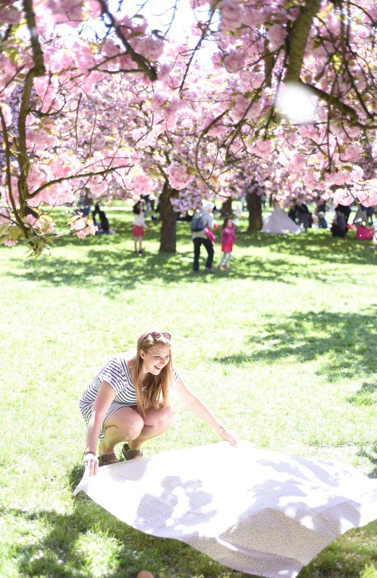 CherryBlossoms2017-38
