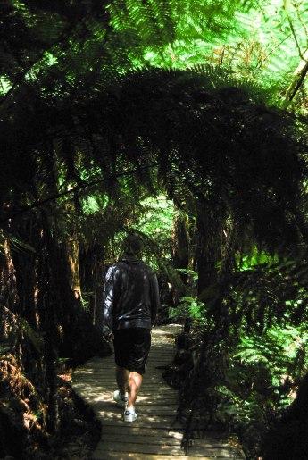 MaitsRestRainforest (1 of 1)